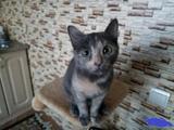 Котенок в добрые руки девочка 6 месяцев